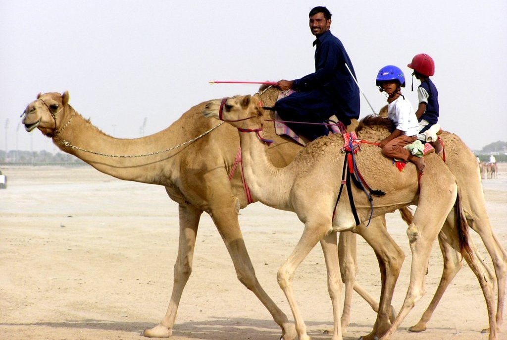 children-camel-jockeys-1522877 Why Camel Milk is healthy for you