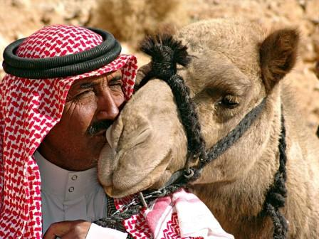 the-kiss-1365733 Why Camel Milk is healthy for you
