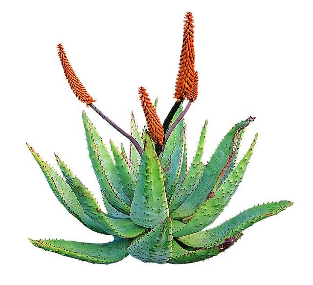 10KeyThings-Aloe-Vera Get rid of that Stickiness! 10 Oily Skin care tips